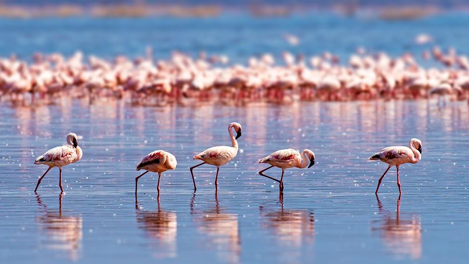01-parc-naturel-regional-de-camargueun-monde-sauvage-et-envoutant